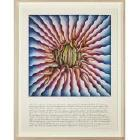 Female Rejection Drawing #3 (Peeling Back) (from The Rejection Quintet, 1974), 1977 by Judy Chicago